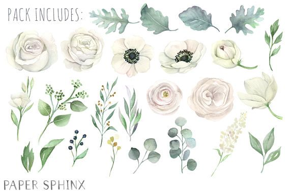 Watercolor White Flowers Clipart.
