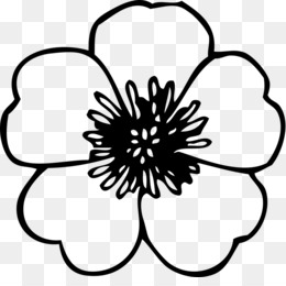 Anemone Flower PNG.