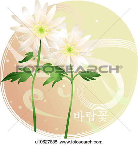 Clipart of flower, windflower, plants, plant, anemone.