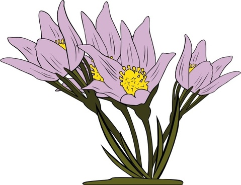Anemone Nemorosa Free vector in Open office drawing svg ( .svg.