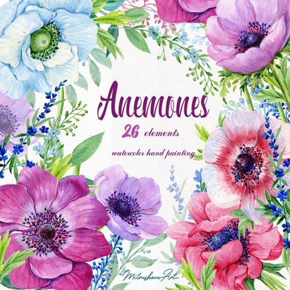 Watercolor Clipart Collection Anemones Flower Elements.