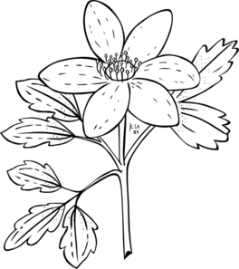 Free Anemone Flower Cliparts, Download Free Clip Art, Free.