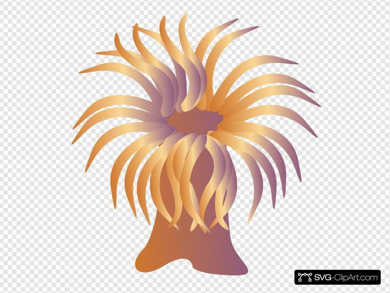 Sea Anemone Clip art, Icon and SVG.