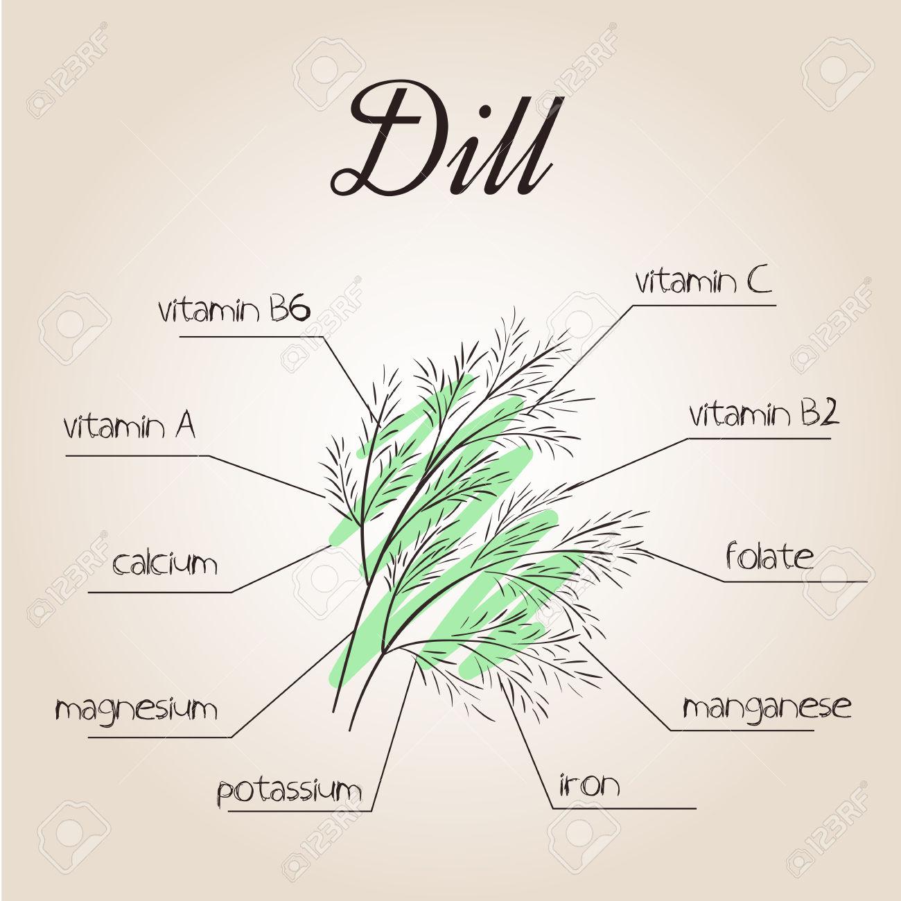 Illustrazione Vettoriale Di Lista Nutrienti Per Aneto. Clipart.