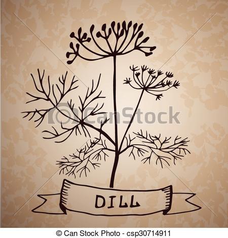 Clipart vettoriali di aneto, fiore, foglia, isolato, erba.