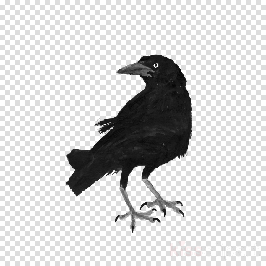 bird crow raven raven fish crow clipart.