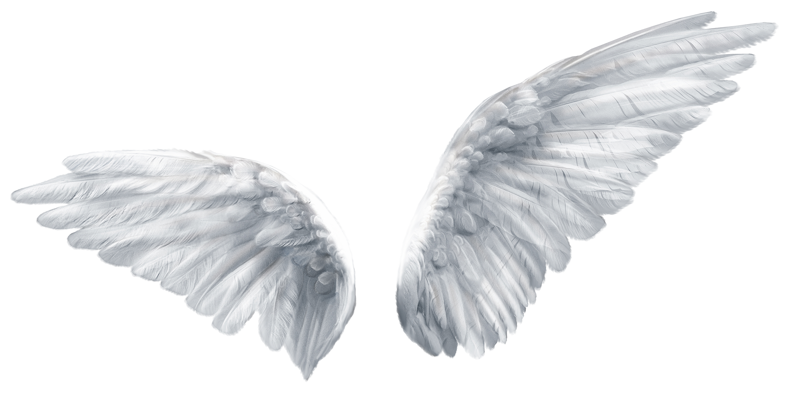 Wing Butterfly Angel Clip art.