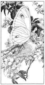 vintage clipart butterfly, printable fairy graphics, digital.