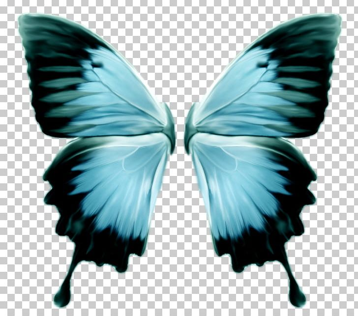 Monarch Butterfly Insect Morpho Menelaus PNG, Clipart.