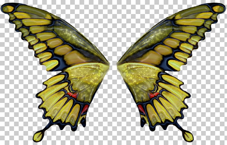 Butterfly Brush, angel wing PNG clipart.