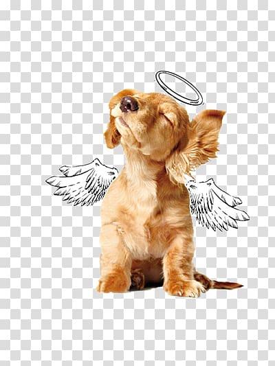 Angel dog transparent background PNG clipart.