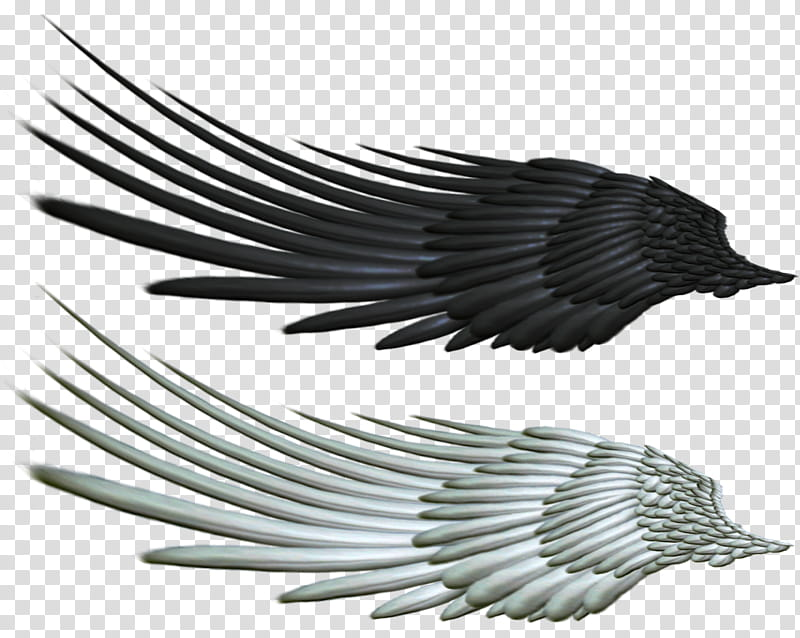 Good and Evil Angel Wing , black and white wings graphic.