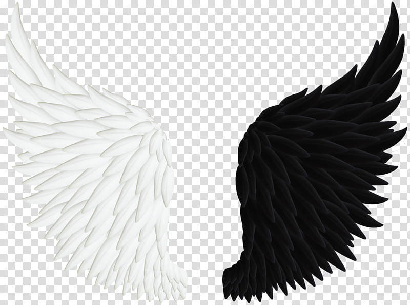 Angel Wings , pair of white and black wings illustration.