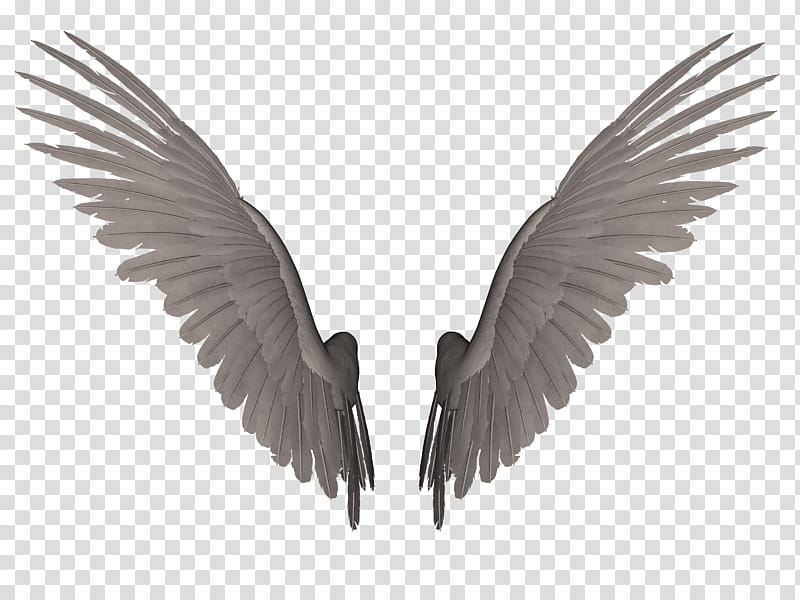 Feathered Wings A , pair of angel wings transparent.