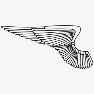 Angel Feathers Free Vector Graphic On Pixabay.
