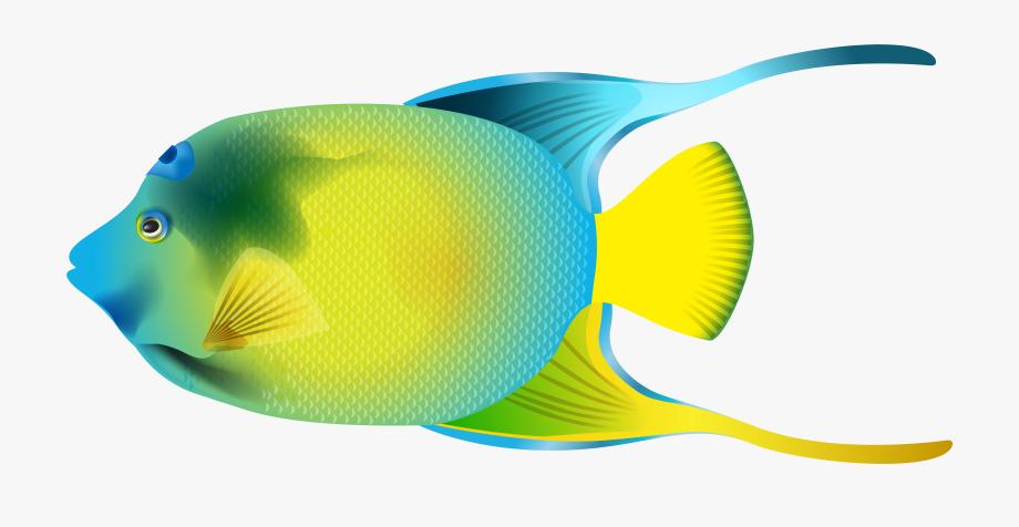 Queen Angelfish Png Transparent Clip Art Image.