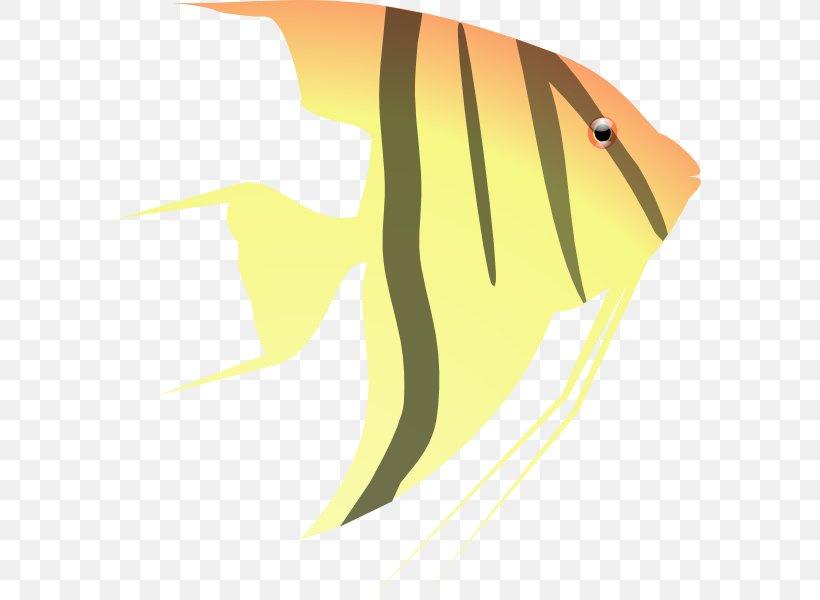 Pterophyllum Altum Fish Clip Art, PNG, 582x600px.
