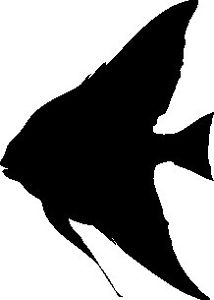Angelfish Silhouette at GetDrawings.com.