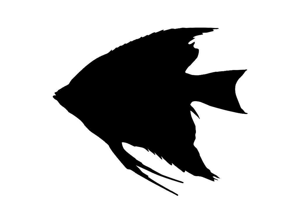 Freshwater angelfish Clip art.