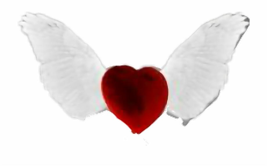 Love Angel Heart Wings Heart.