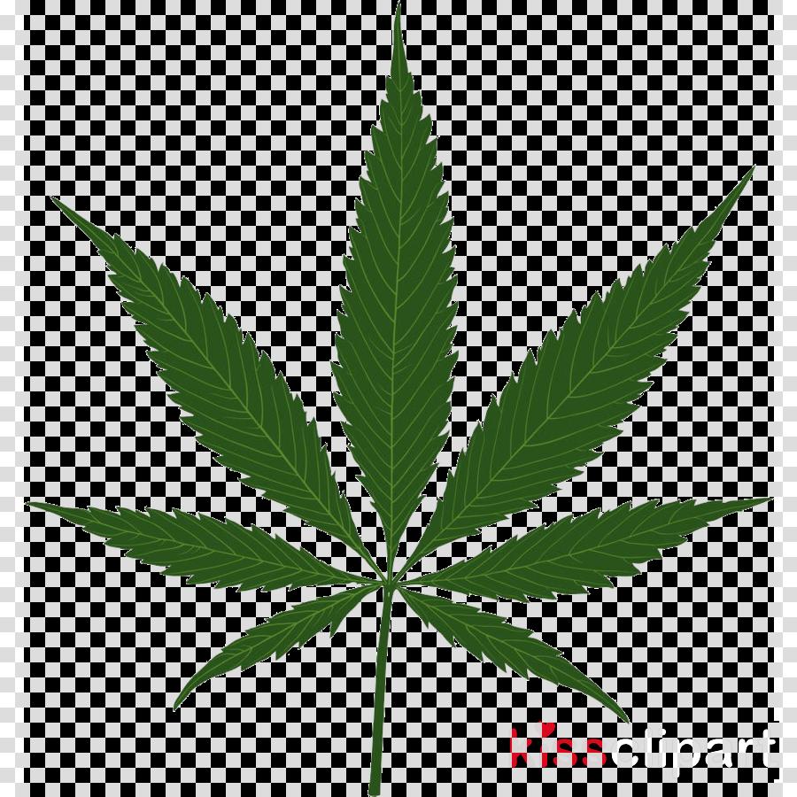 leaf plant hemp family herbal flower clipart.