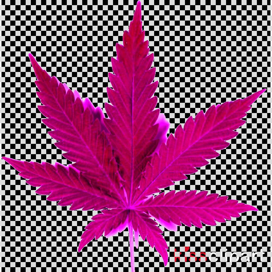 leaf plant pink flowering plant purple clipart.