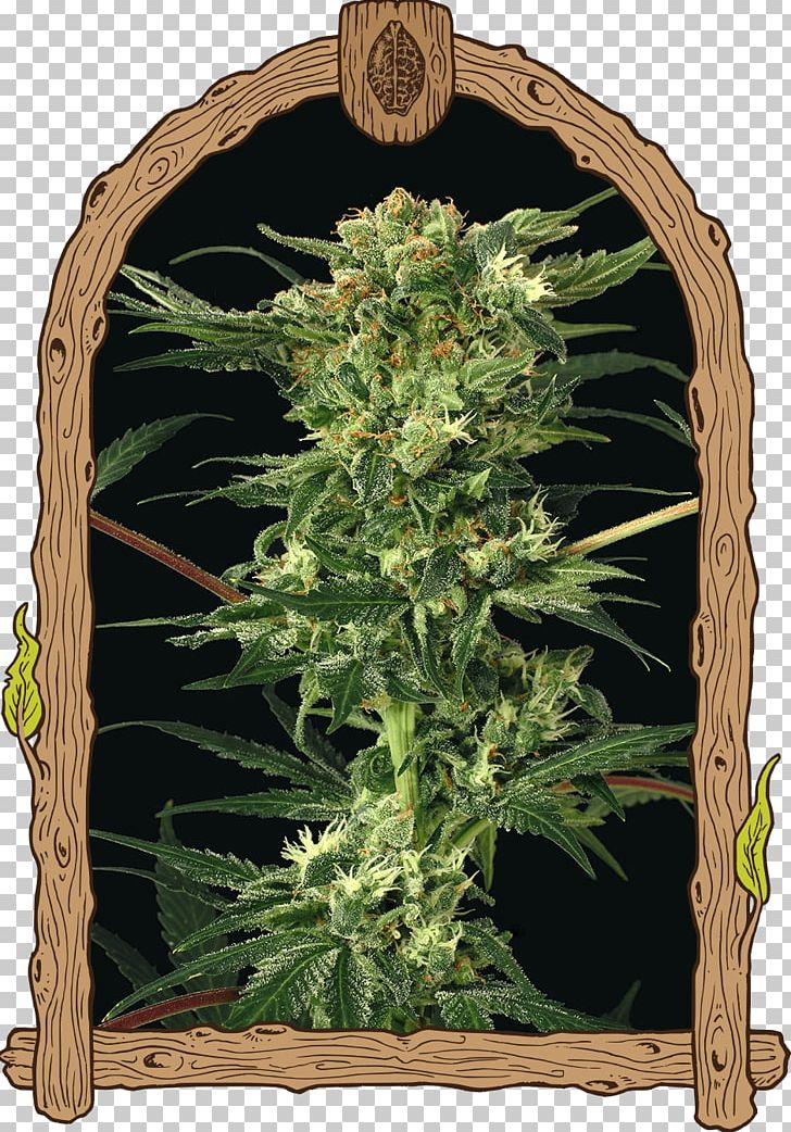 Kush Cannabis Seed Bank Devil PNG, Clipart, Angel, Blue.