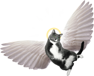 Angel Cat Clipart.