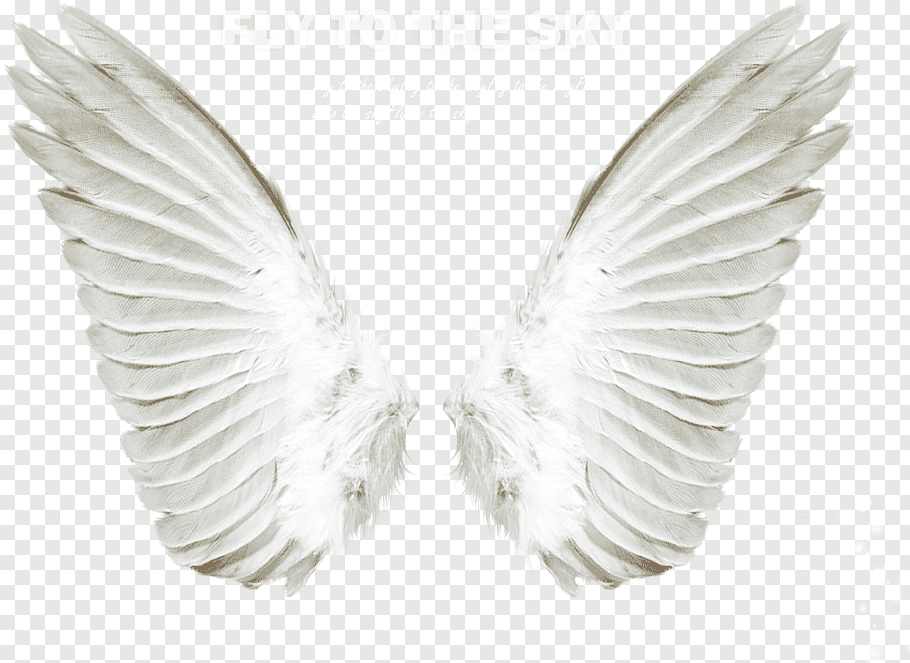 White wings with fly to the sky text overlay, Angel, Angel.