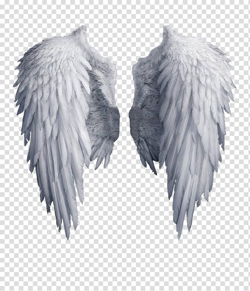 Angel Wings , White Angel Wing Transpare #720897.