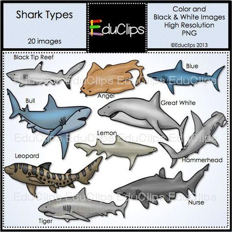 Shark Types Clip Art Bundle by EduClips on Etsy, $4.00.
