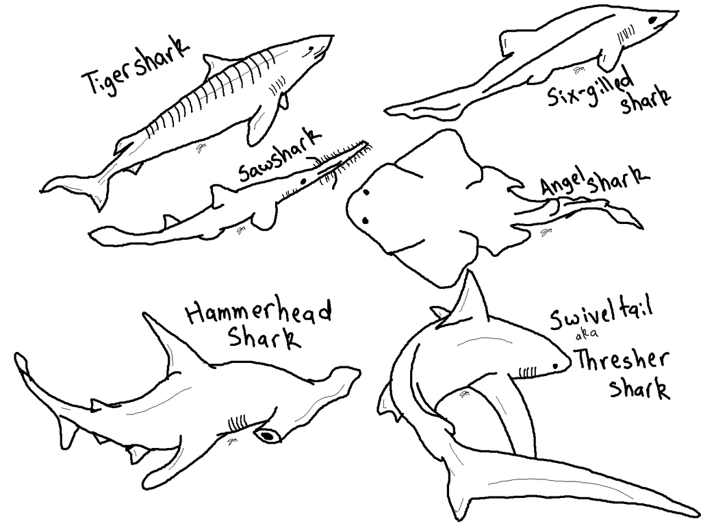 Hammerhead Shark clipart coloring page #1.