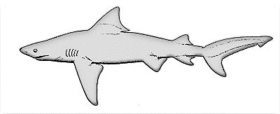 Angel Shark Clipart.