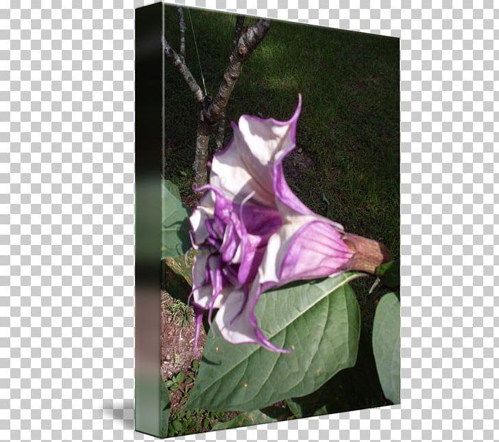 Daturas Floral Design Flower Angel\'s Trumpets PNG, Clipart.