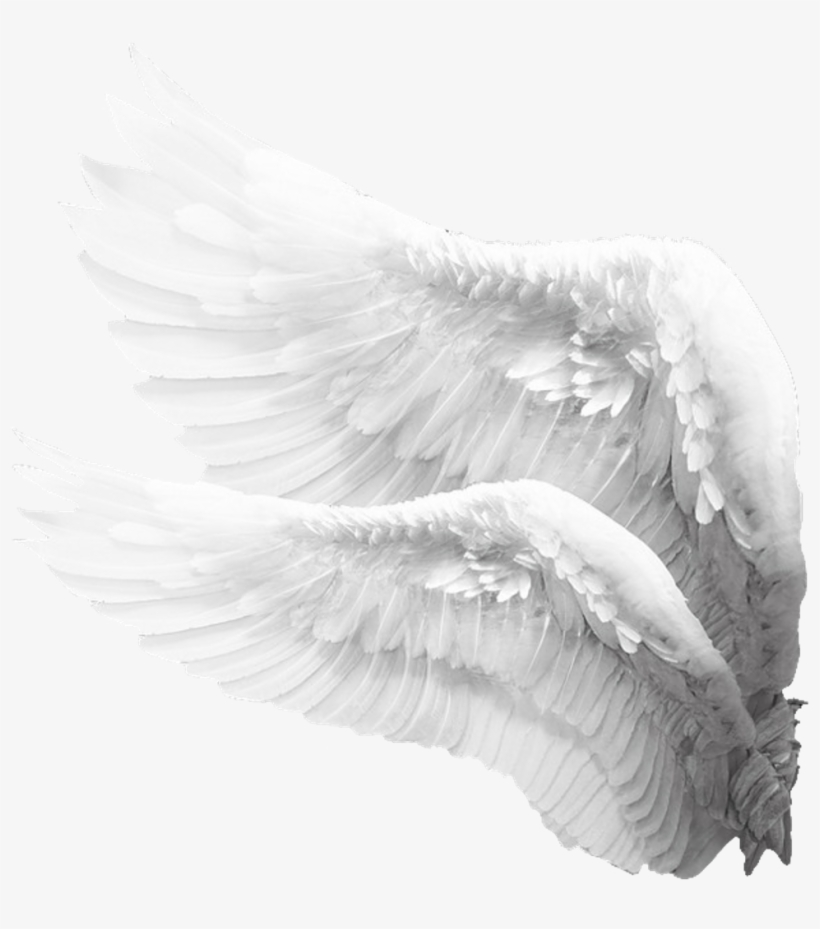 sideview #angelwings #angels #angel #wings #feathers.