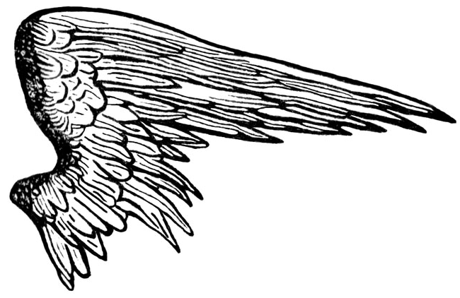 Free Black Angel Wings Png, Download Free Clip Art, Free.