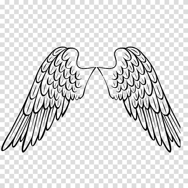 Materials, black angel wings illustration transparent.