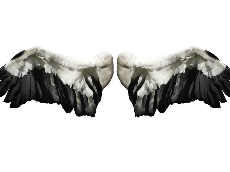 Angel Wings PNG Stock Image Free (Isolated.
