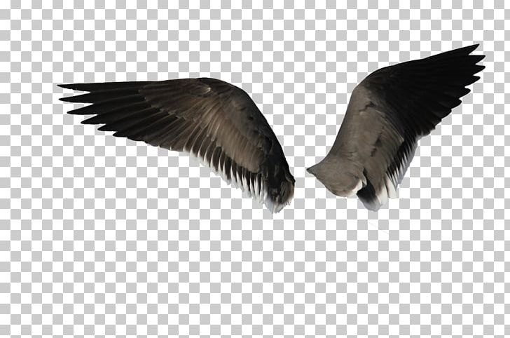 Bird Angel Wing PNG, Clipart, Angel Wing, Beak, Bird, Desktop.