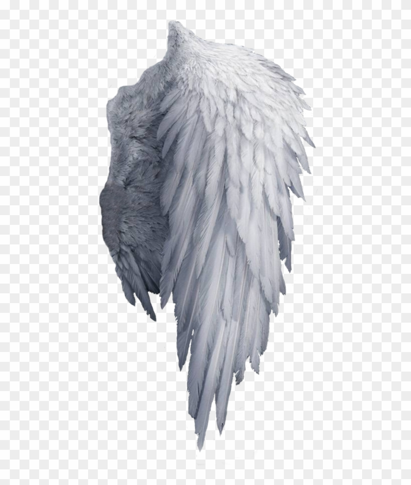 White Angel Wings Png , Png Download, Transparent Png.