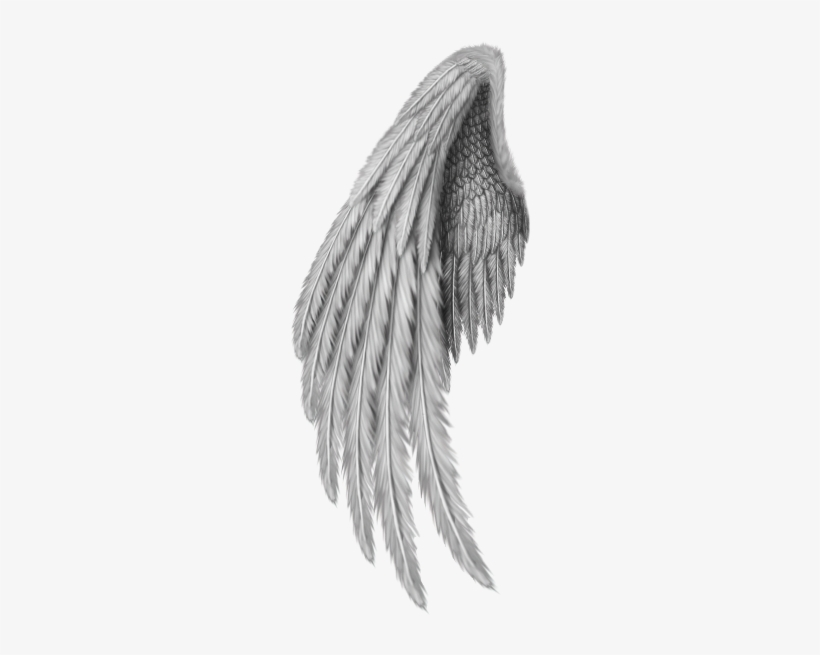 Angel Wings Freetoedit.