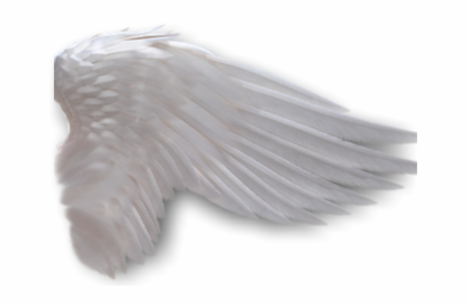 Angel Wings Anime Side View Download.