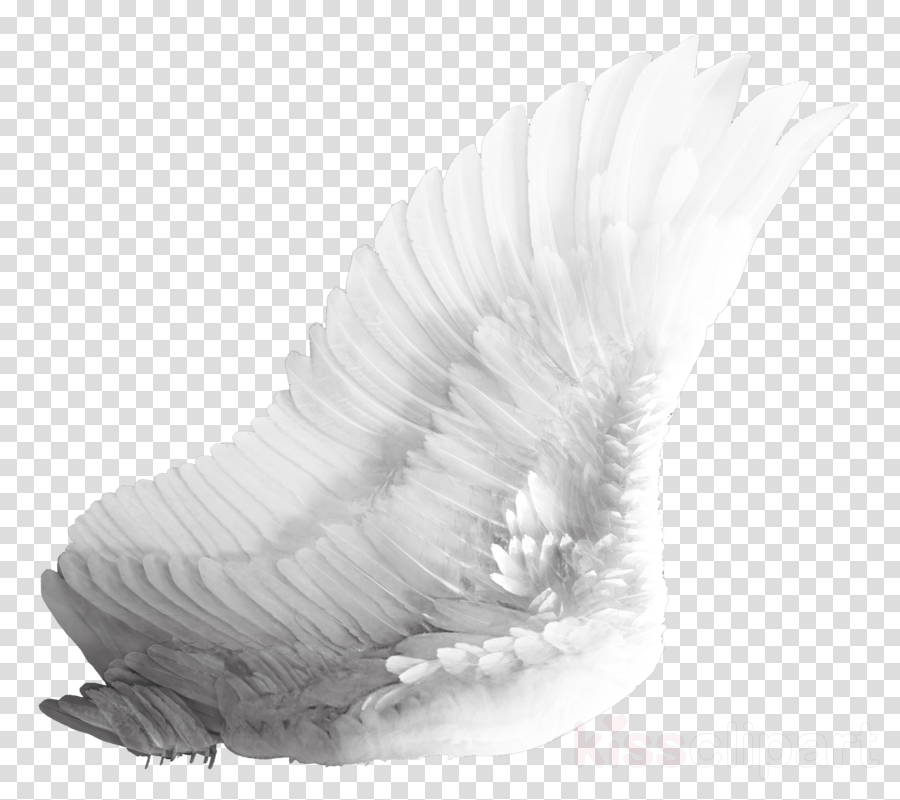 Feather, transparent png image & clipart free download.