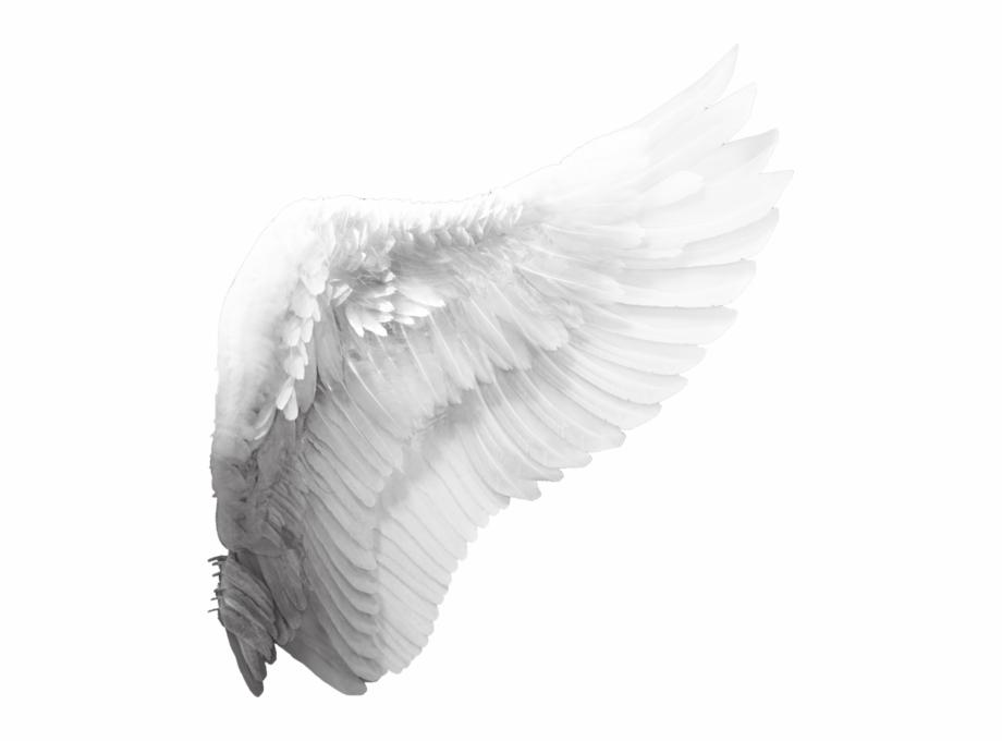 Angel Wing.