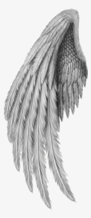 Gold Wings PNG, Transparent Gold Wings PNG Image Free Download.
