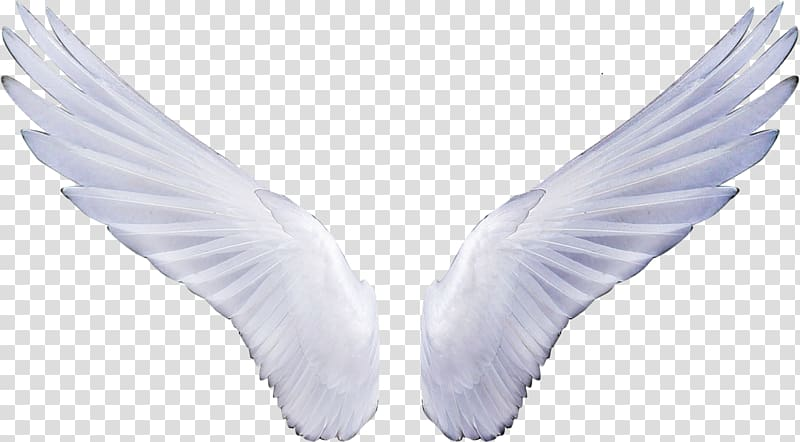 Angel Sticker , wings transparent background PNG clipart.
