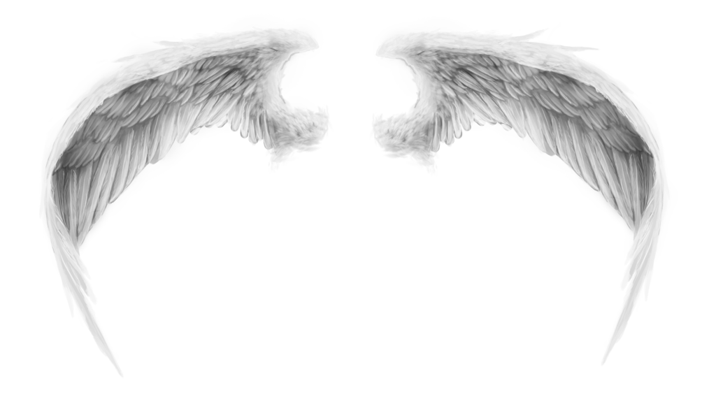 Angel Wings, Wings PNG Images Transparent Free Download.
