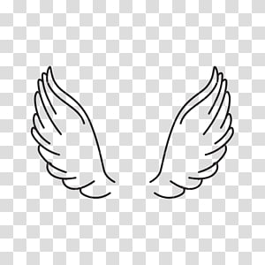 Wing PNG clipart images free download.