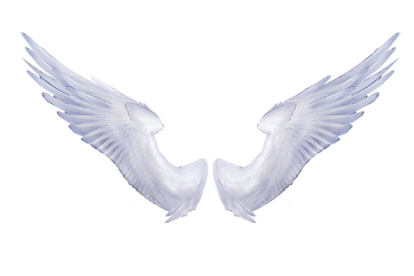 Angel Wings Transparent Background.