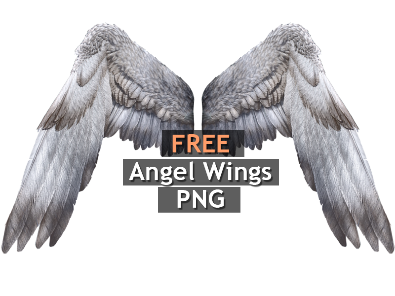 White Angel Wings PNG Free (Isolated.